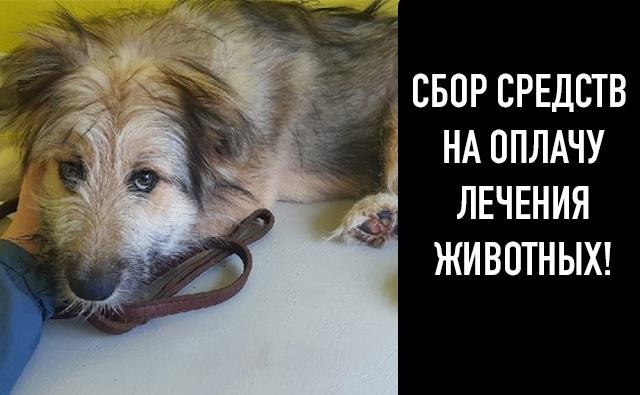Thumbnail for - Помочь оплатить ветеринарные счета за июль