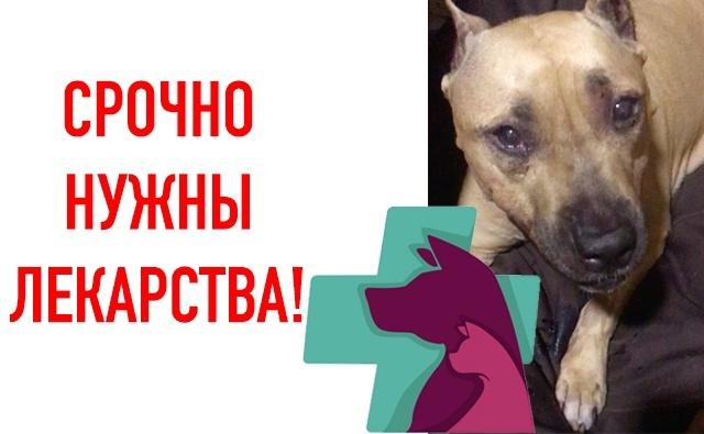Thumbnail for - СРОЧНО НУЖНЫ ЛЕКАРСТВА!
